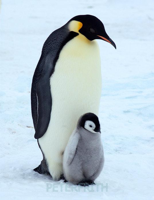 Penguin Pictograms | ByrdMakes